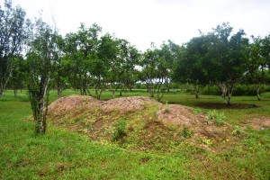 Compost heap at NAREI's Orchard farm in Kairuni