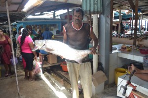 Catch of the day at Mon Repos Market