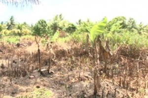 lands-being-cleared-by-a-farmer-as-he-returns-to-his-farm