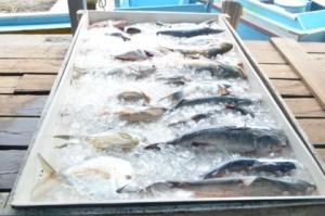 Fish on Display
