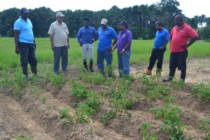 Minister Holder and otherofficials at NAREI's Irish Potato plot, Ebini