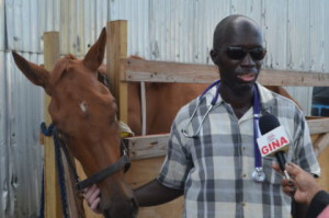 Dr. Dwight Walrond, Deputy Chief Executive Officer of the Guyana Livestock Development Authority (GLDA) with the horse that was illegally imported