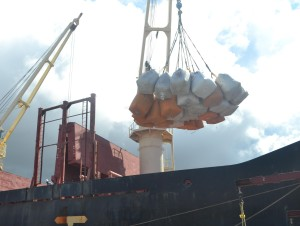 The paddy to be exported being loaded on to the ship