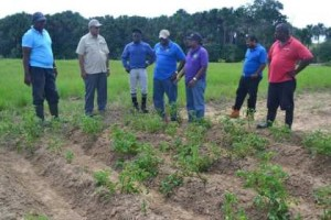 Minister-Holder-and-otherofficials-at-NAREIs-Irish-Potato-plot-Ebini