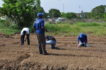 PROPEL facilitators (in blue) in field with research students.
