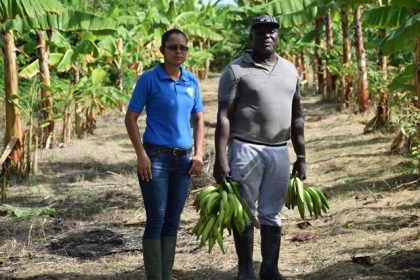 Region 4 Crop Extension Assistant, Maleka Russell and Buxton farmer Linden Talbott.