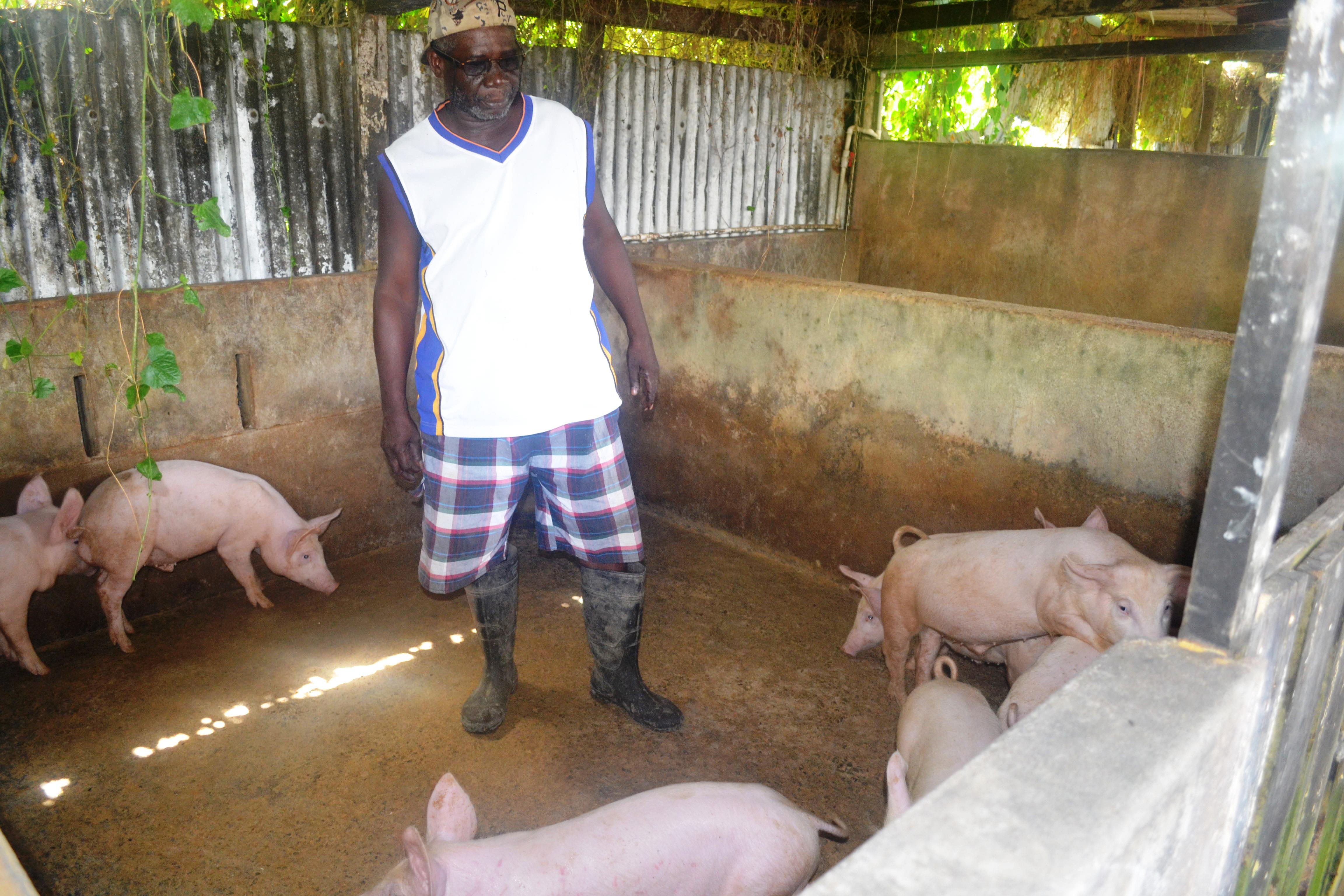 Mr. Owen McGarrel and some of the piglets he got using GLDA's AI services