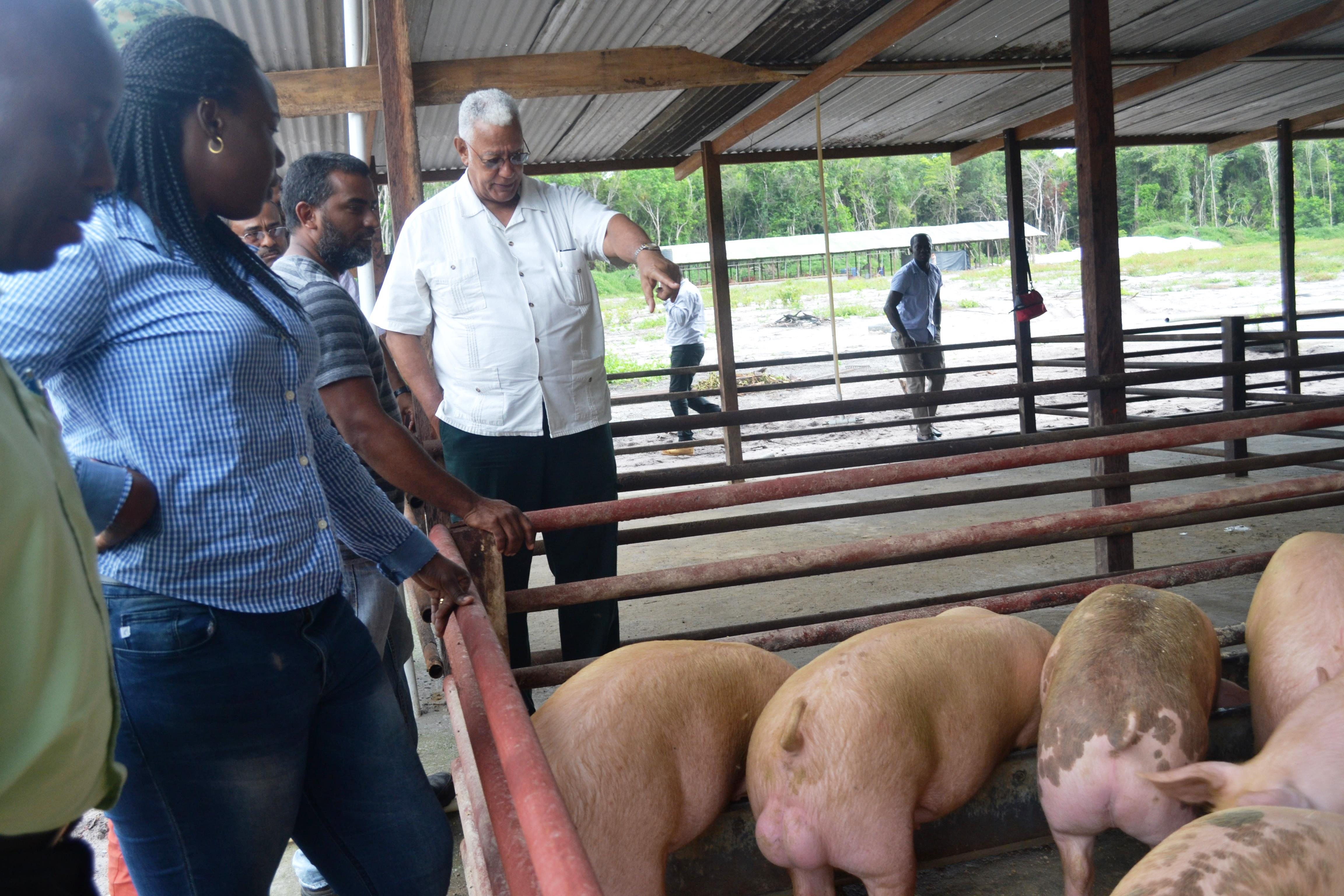Minister Holder is pictured with Mr. Stephan Low-a-Chee (third left) and other MOA officials on his pig farm