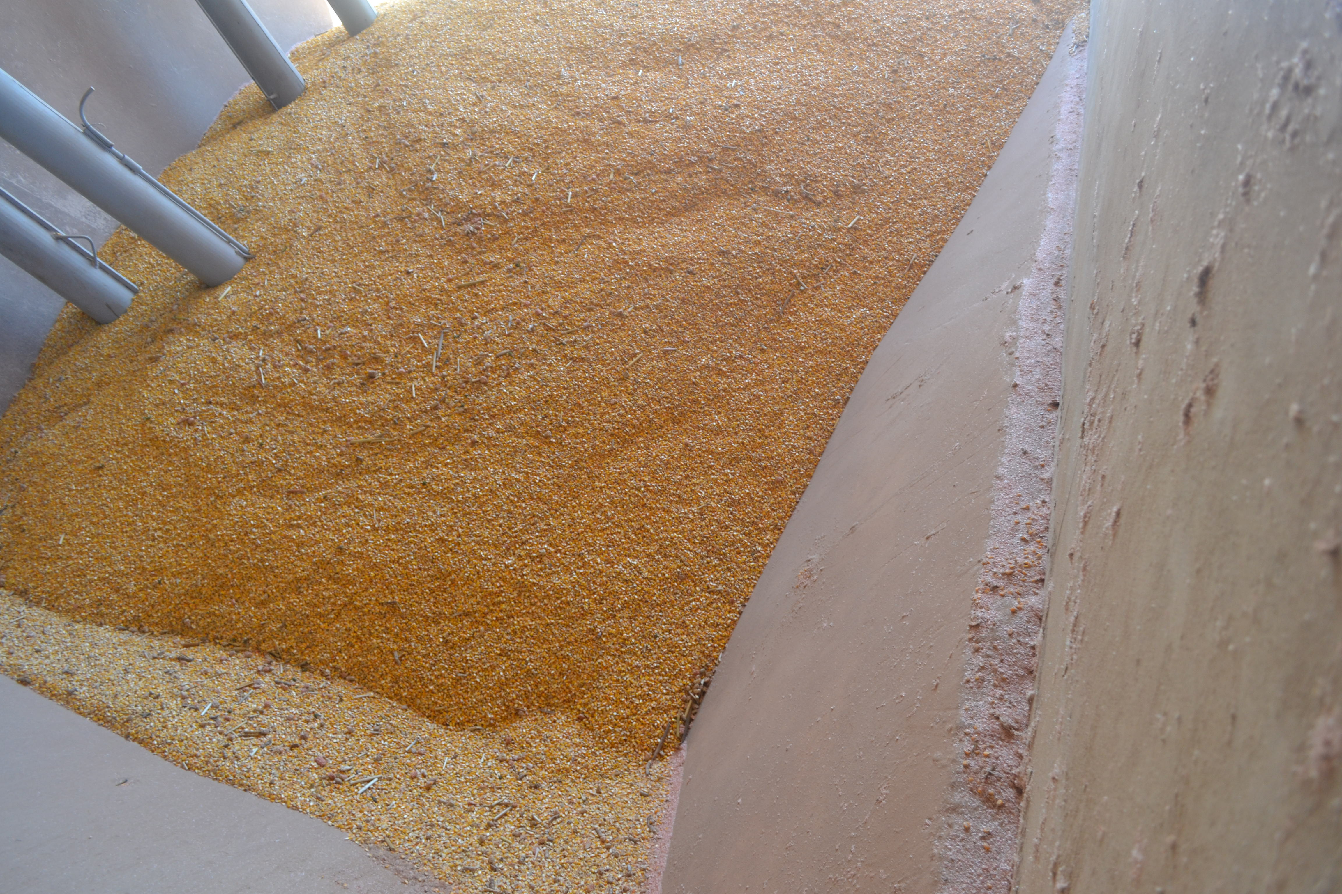 Corn in Mr. Paulo Franz's factory