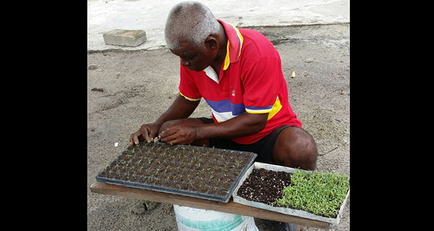 Khadu, a farmer from Laluni, transplanting germinated seeds into seed tray